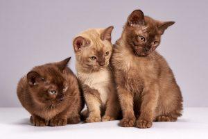 Kittens, Pets