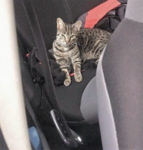 Travelling, Cat, JW Lister, Pets